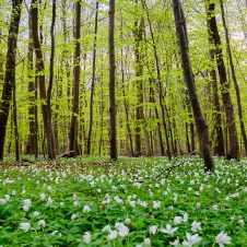 Göttinger Wald
