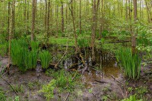 Mitte Mai 2017: niedriger Wasserstand und starker Bewuchs