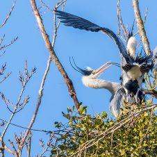 Der frühe Vogel kriegt das Nest