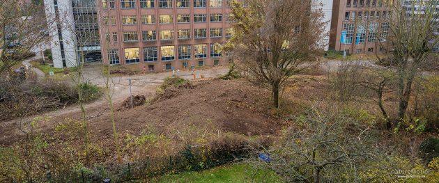 Zerstörter Lebensraum - wertvolles Biotop muss Parkhaus weichen